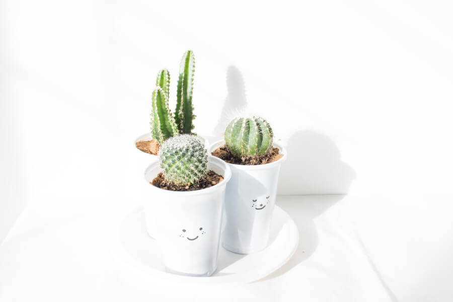 Three Cactuses in white pots with smiley faces on the pots | blog post featured image