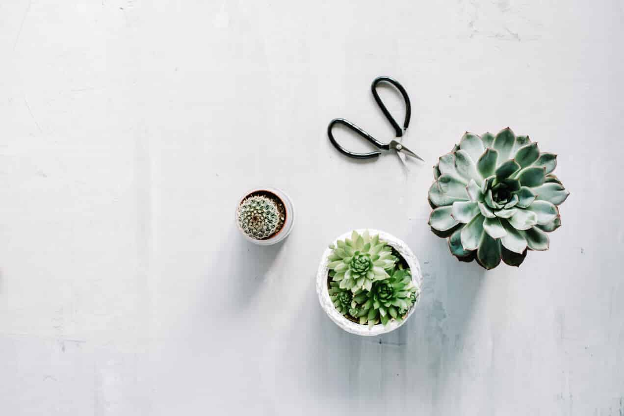 Succulents in pots next to gardening shears on a concrete countertop | Branding Photo for Blue + Pine Creative