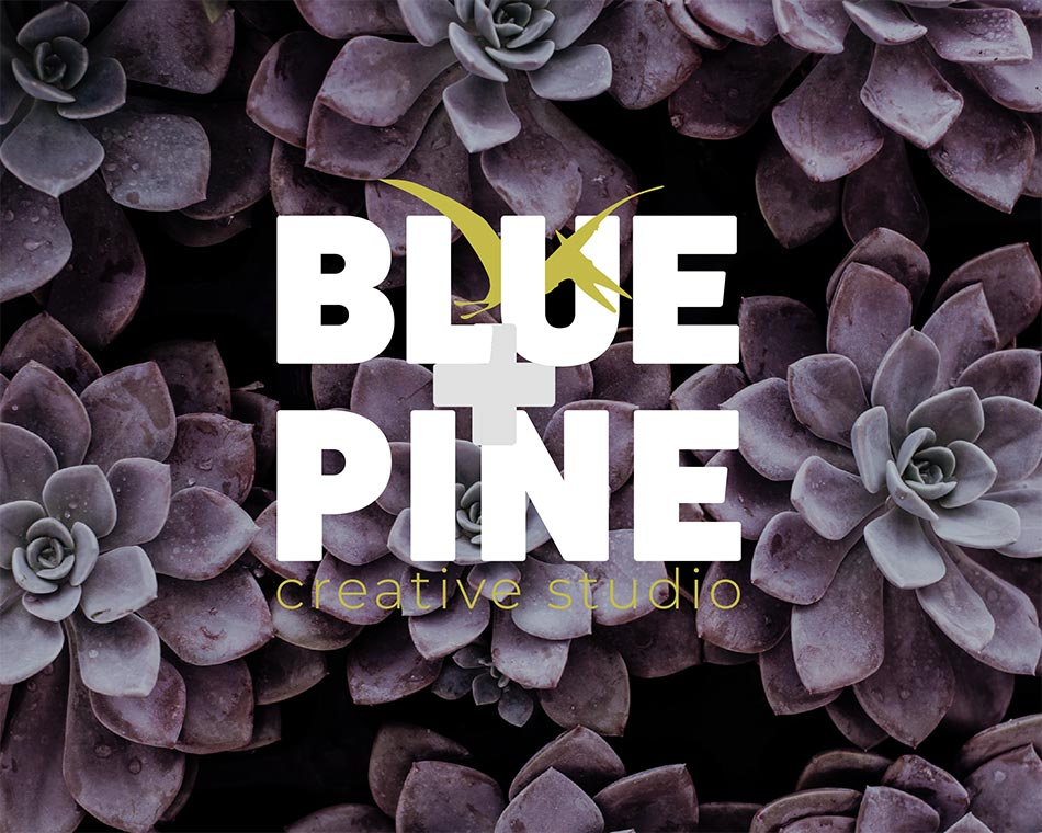An image of purple succulents with the white version of the Blue+Pine logo on top. The logo background is transparent, so there is nothing but the image behind it.